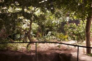 Junglebos-kunstbeplanting